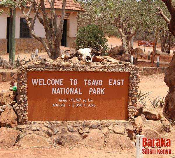 safari-tsavo-est-ovest-amboseli-barakasafarikenya-25