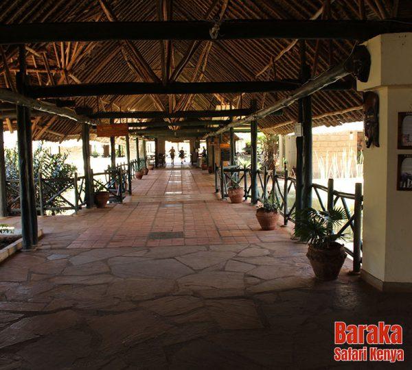 safari-tsavo-est-ovest-amboseli-barakasafarikenya-36