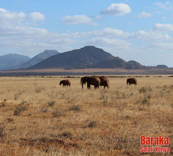 safari-tsavo-est-ovest-amboseli-barakasafarikenya-39