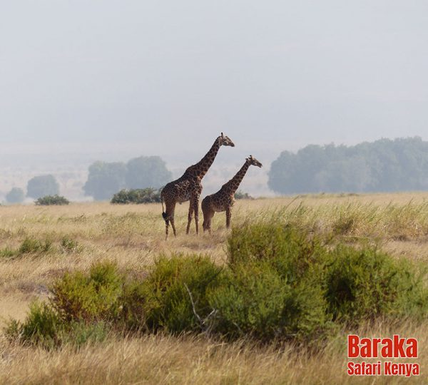 safari-tsavo-est-ovest-amboseli-barakasafarikenya-4