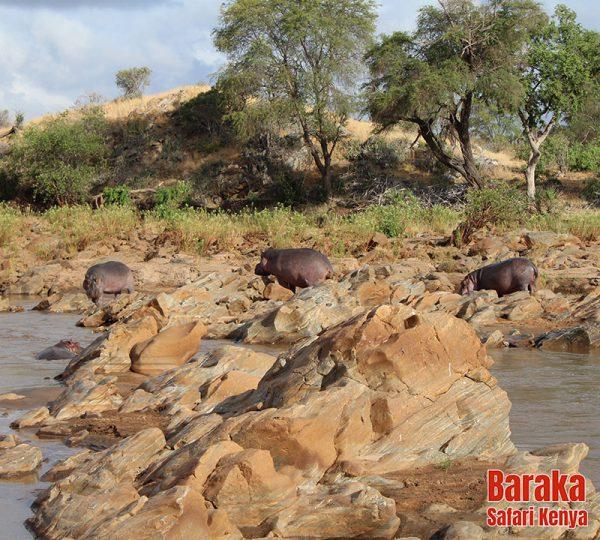 safari-tsavo-est-ovest-amboseli-barakasafarikenya-46