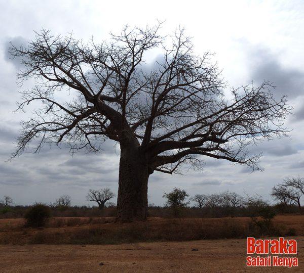 safari-tsavo-est-ovest-amboseli-barakasafarikenya-49