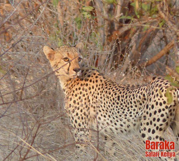safari-tsavo-est-ovest-amboseli-barakasafarikenya-58