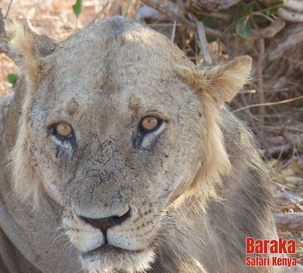 safari-tsavo-est-ovest-amboseli-barakasafarikenya-60