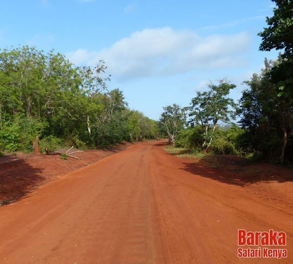 safari-tsavo-est-ovest-amboseli-barakasafarikenya-68