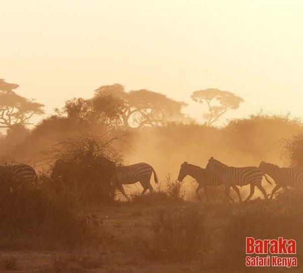 safari-tsavo-est-ovest-amboseli-barakasafarikenya-7