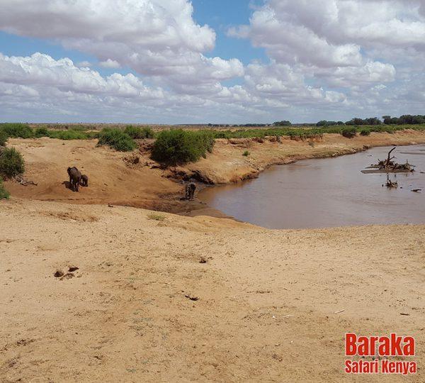 safari-tsavo-est-ovest-amboseli-barakasafarikenya-71