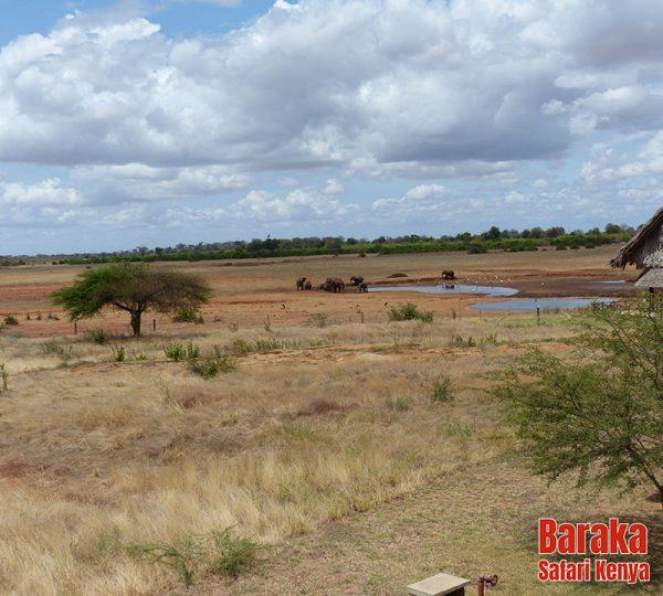 safari-tsavo-est-ovest-amboseli-barakasafarikenya-77