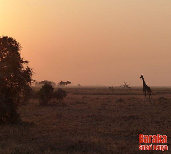 safari-kenya BarakaSafariKenya