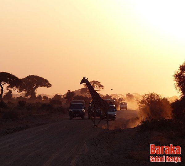 safari-tsavo-est-ovest-amboseli-barakasafarikenya-9