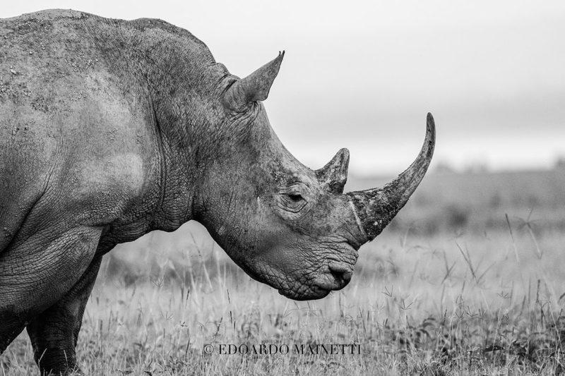 rinoceronte kenya nakuru lake