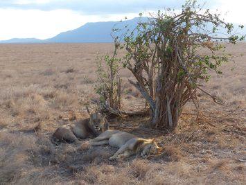 Safari-Watamu-Tsavo-Est-BARAKA-KENYA
