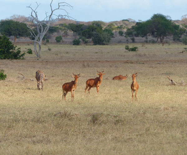 Safari-Watamu-Tsavo-Est-BARAKA-SAFARI-KENYA