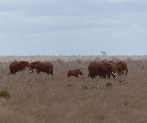 Safari-in-KENYA-BARAKA-SAFARI-KENYA